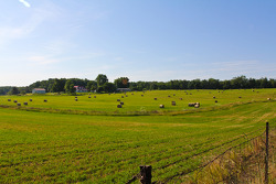 Pastures near the track
