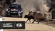 WRC 2016 resumen: Rally Guanajuato México