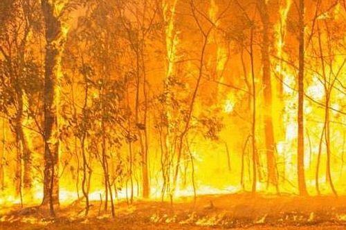 WRC, Australia in fiamme: i team aiutano le persone colpite