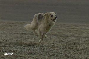 VIDEO: un perro invade los entrenamientos libres en Bahrein