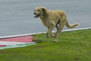 Формула 1 видела все. Но когда на трассе собака – тут все сходят с ума