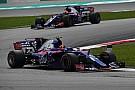 Підсумки сезону Ф1: Toro Rosso - кардинальні зміни