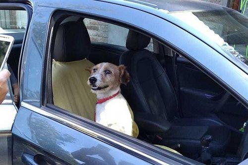 Cachorro ferido encontrado por Nelsinho Piquet em Santiago ganha novo dono