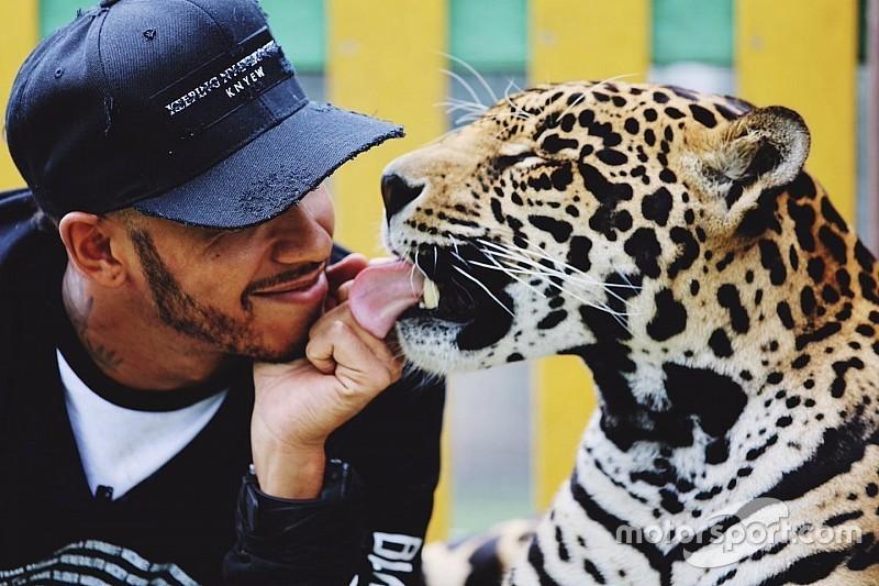 Hamilton fue duramente criticado por jugar con animales salvajes