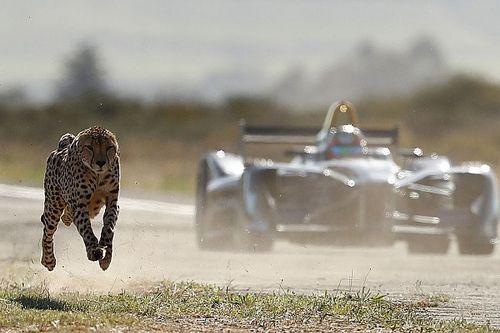 Formula E estrema: una monoposto sfida un ghepardo