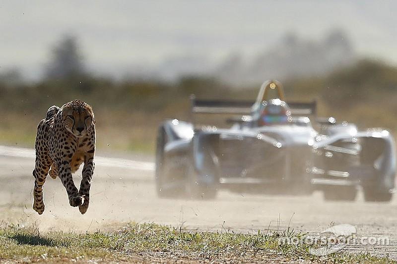 VÍDEO: Guepardo aposta corrida com carro da F-E
