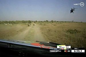 Safari WRC: Neuville extends Kenya lead after brush with wildlife