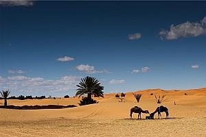 Bez rajdów w Maroku