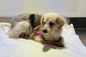 Rescatada la perra que detuvo la Fórmula 1 en Bahrein