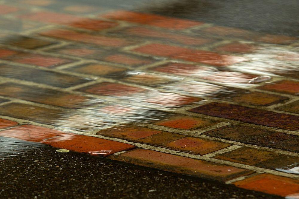 La Brickyard 400 se pospone por lluvia en el IMS