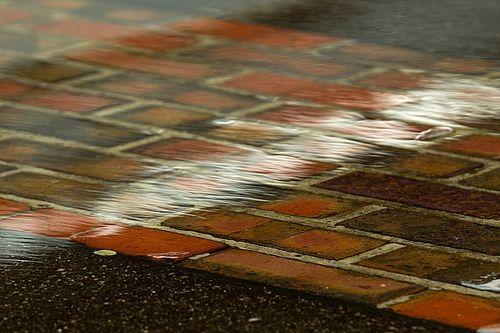 Brickyard 400 postponed after weekend washout at IMS