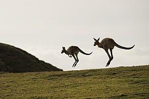 Vídeo: canguros invaden la pista en las 12 Horas de Bathurst