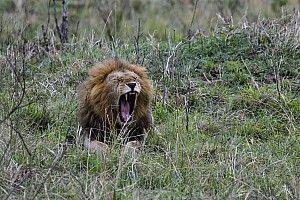 L'organisation veut éviter les problèmes avec la faune au Kenya