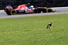 Sainz se encomienda a la lluvia en Interlagos para remontar desde el 15º