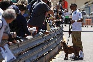 Hamilton'ın köpeği Coco hayatını kaybetti