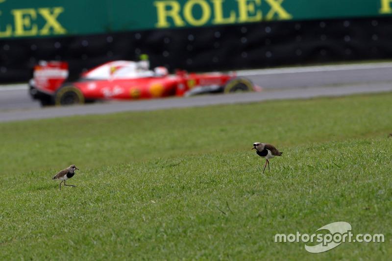 Kimi Raikkonen, Ferrari SF16-H y dos aves