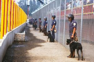 Police with dogs guard the safety fence in front of a grandstand