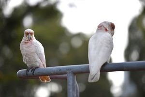 Птицы в Альберт-парке