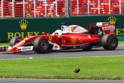 Sebastian Vettel, Ferrari SF16-H passe un canard