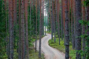 Schotterpiste der Rallye Estland