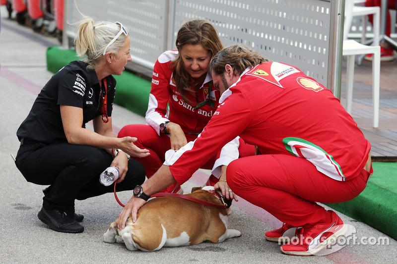 Прес-секретар Ferrari Стефанія Боч і Джіно Розато бавляться із собакою Льюіса Хемілтона