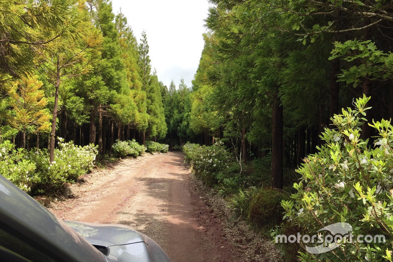 Azores Rally forest stage