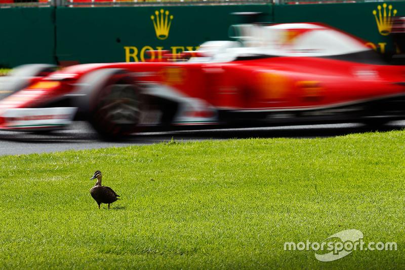 Vettel passeert eend