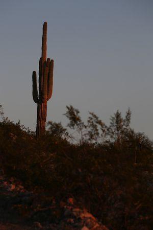 Un cactus de Phoenix
