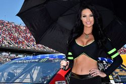 Monster Energy grid girl