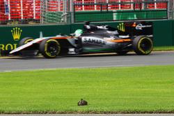 Nico Hulkenberg, Sahara Force India F1 VJM09 passe un canard