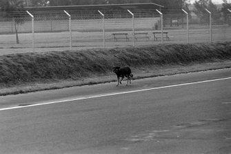 Perro callejero en la pista