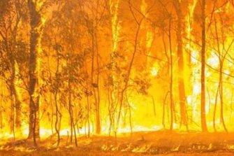 WRC, Rally d'Australia, incendio