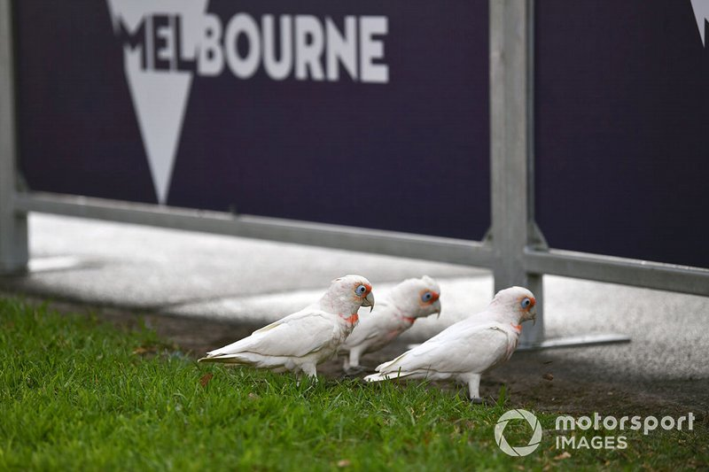 Birds in Albert Park