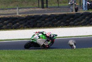 Jonathan Rea, Kawasaki Racing Team, Geese