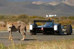 A cheetah with a Formule E car