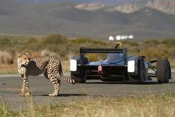 Un guepardo corre contra un coche Fórmula E