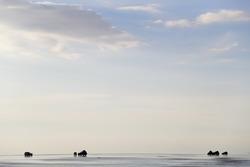Sfeerbeeld Uyuni