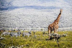Ambiente en Kenia