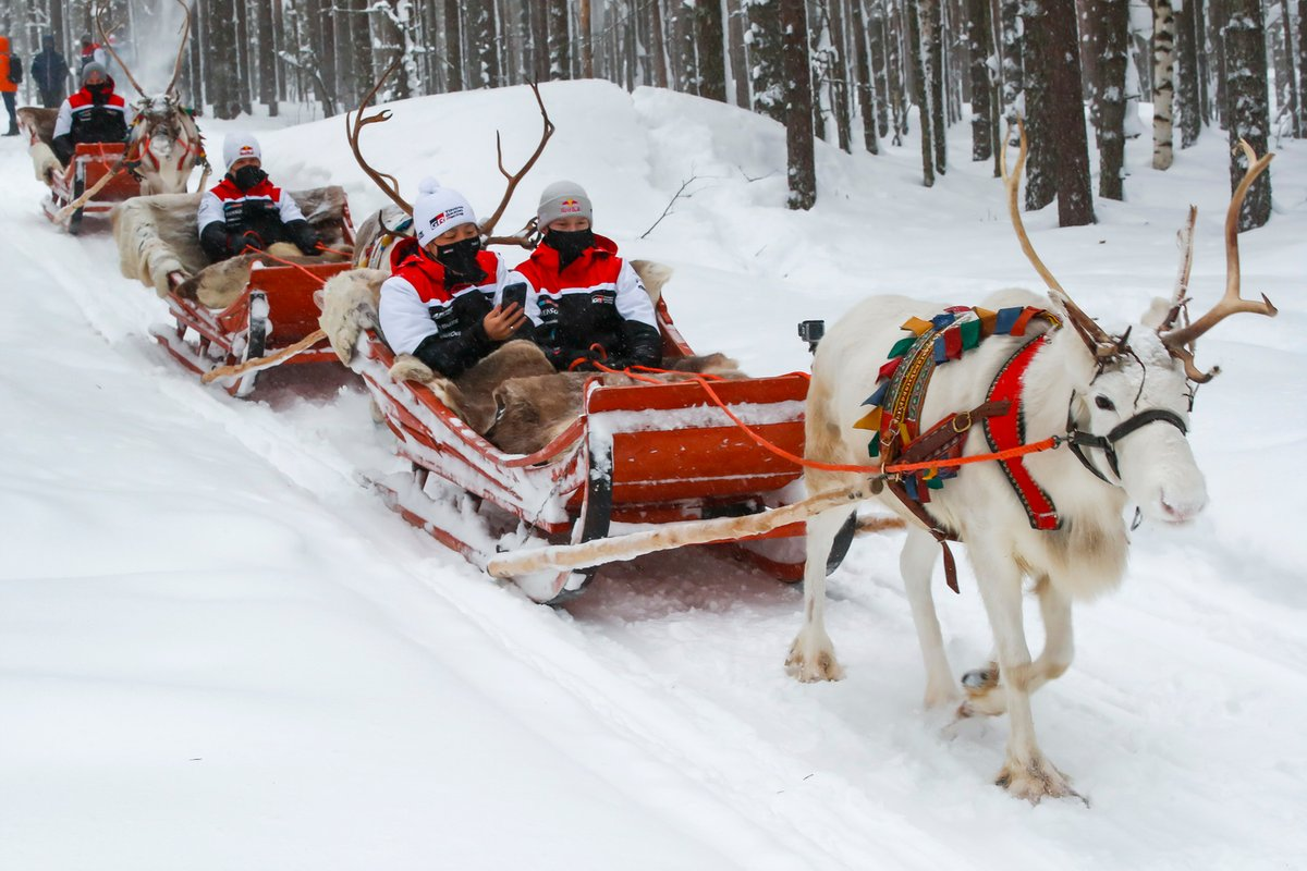 Sebastien Ogier, Elfyn Evans, Kalle Rovanpera and Takamoto Katsuta of Toyota Gazoo Racing are seen taking Reindeer Sled Ride
