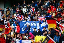 Steun voor Pierre Gasly, Toro Rosso