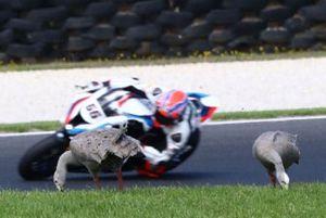 Tom Sykes, BMW Motorrad WorldSBK Team, Geese