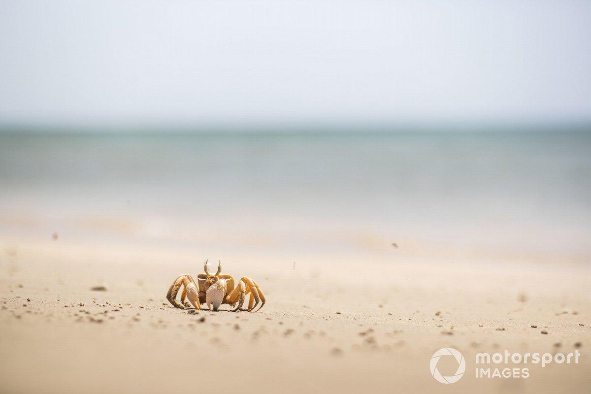 Un cangrejo en la playa que limpiaron los pilotos de Extreme E