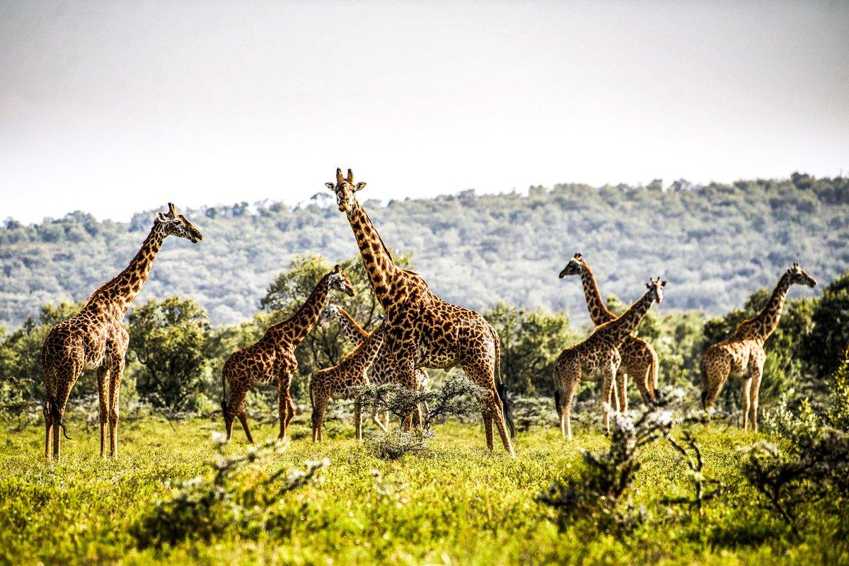 Ambiance du Kenya