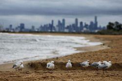 Seagulls on scenic Brighton Beach