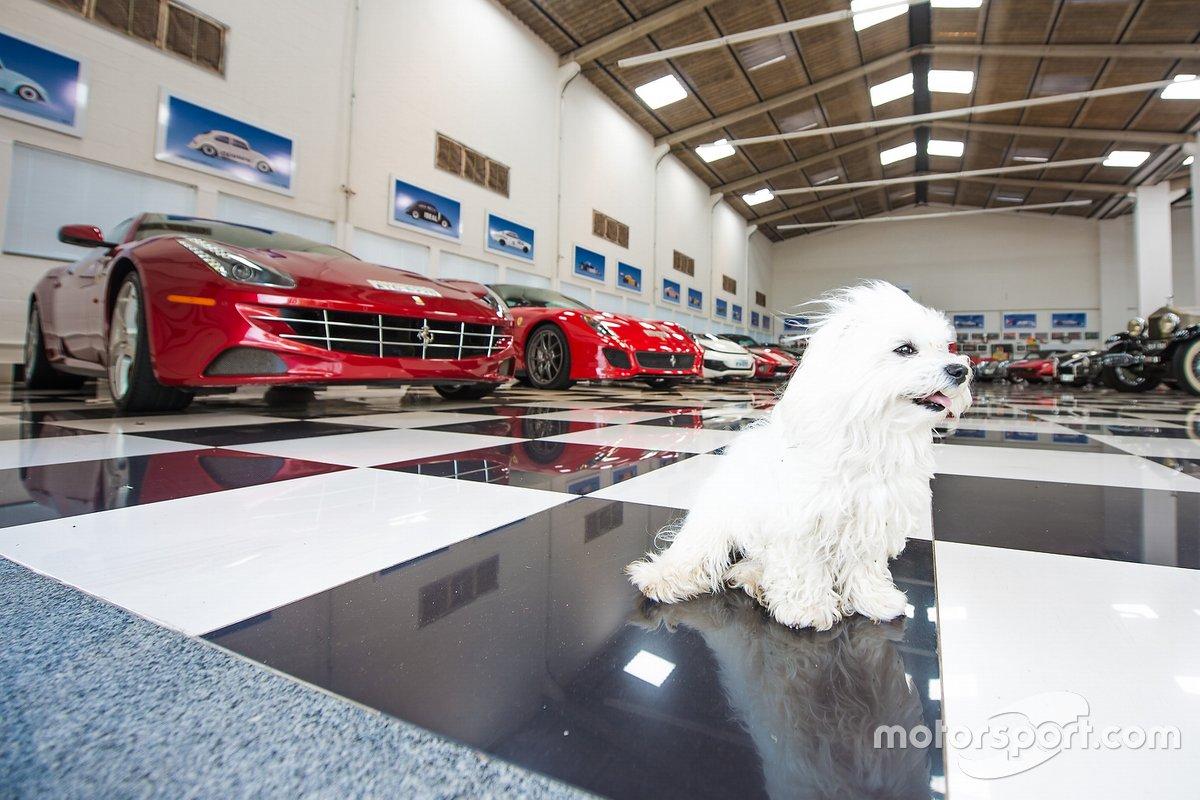 Cachorro de Piquet