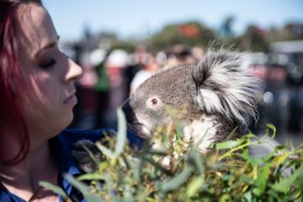 Koala al GP d'Australia