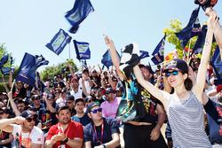 Carlos Sainz Jr., Scuderia Toro Rosso fans