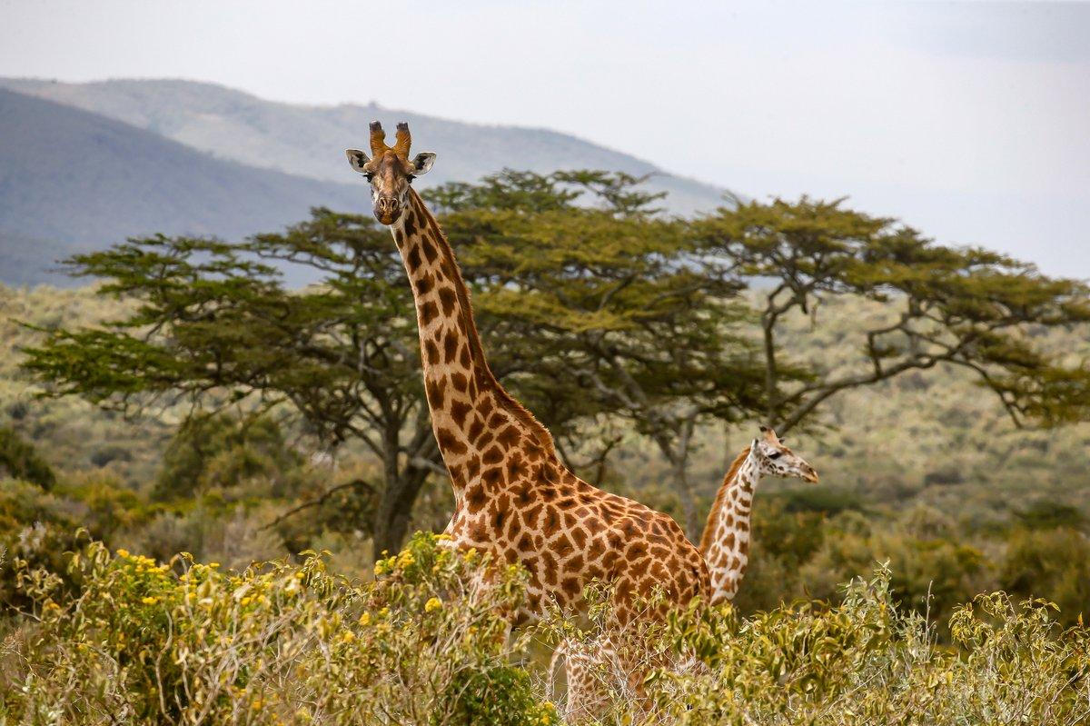 Atmosfer di Kenya