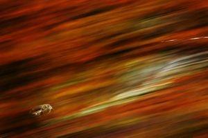 Brad Philpot, Power Max Car Care Racing Vauxhall Astra