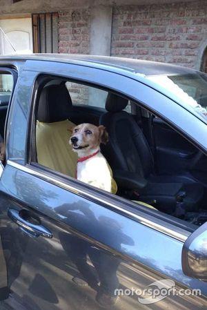 Dumbo, cachorro resgatado por Nelsinho Piquet em Santiago